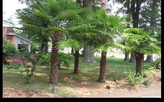 Palm trees for sale in cape coral - bring life to your garden today