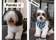 Dog Grooming Services in Chicago - Book Your Dog Grooming Service Today